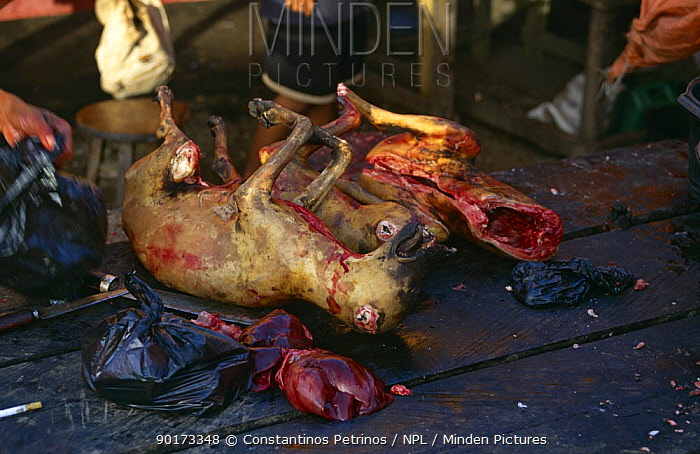 Dog meat, on sale in market, South Sulawesi, Indonesia  -  Constantinos Petrinos/ npl