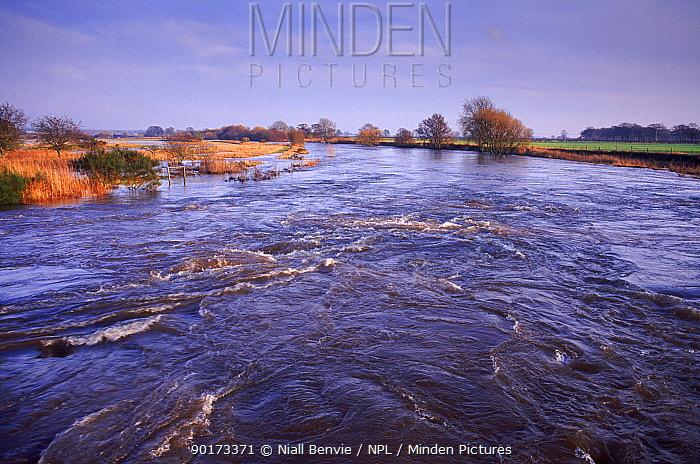 South Esk river in flood Tayside, Scotland, UK  -  Niall Benvie/ npl