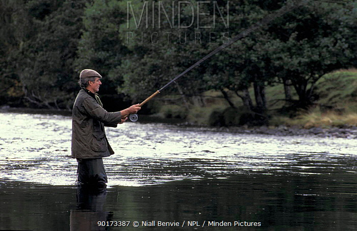 Salmon fishing on River Farrar Inverness Scotland UK  -  Niall Benvie/ npl