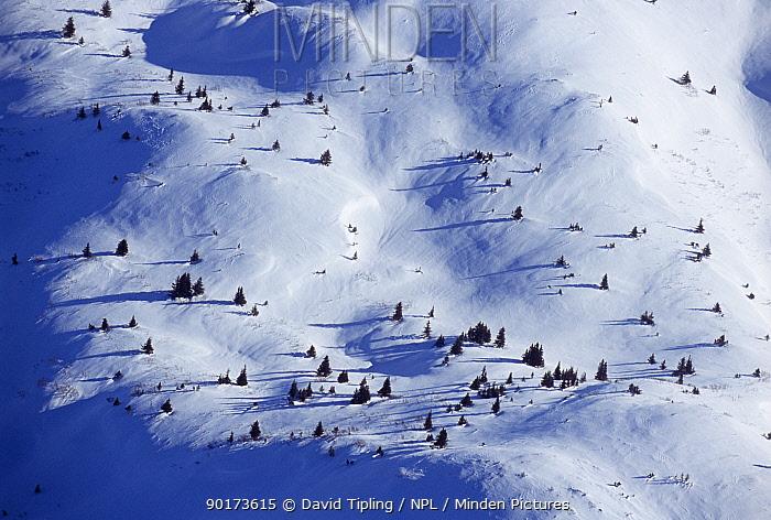 Aerial view of Kenai National Park in winter, Alaska, USA  -  David Tipling/ npl