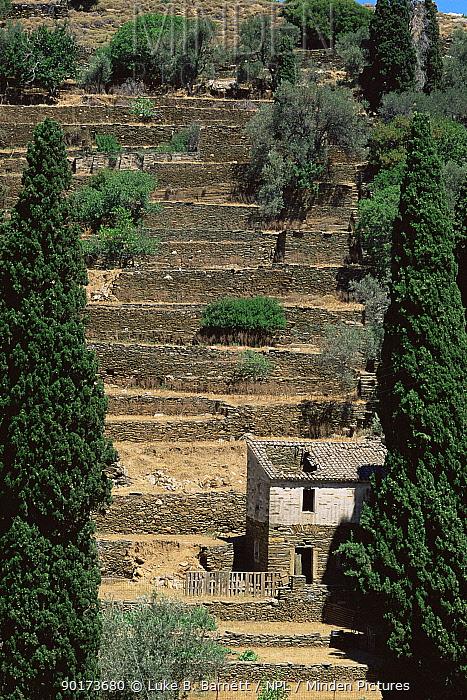 Traditional terraced farming landscape, Andros, Greece  -  Luke B. Barnett/ npl