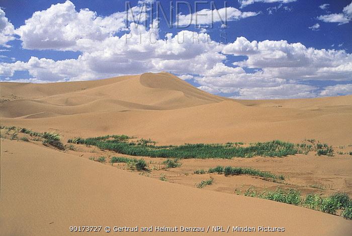Landscape of sand dune system Gobi Desert Mongolia  -  Gertrud & Helmut Denzau/ npl