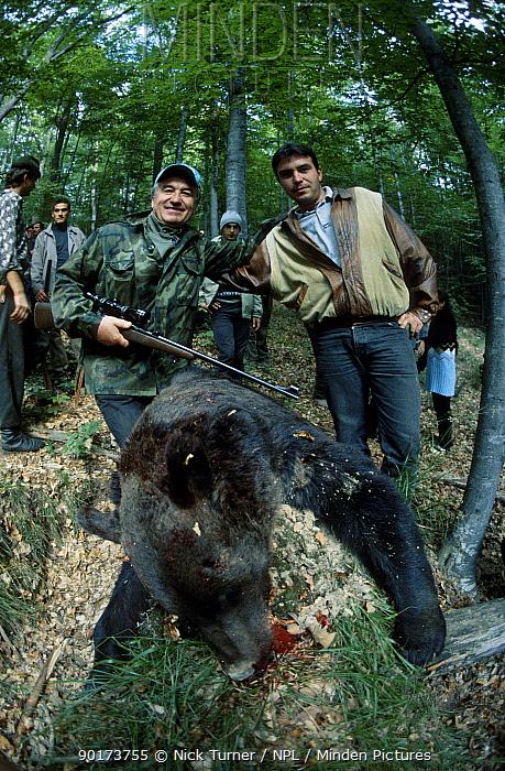 Hunters with dead Brown bear (Ursus arctos) Domnesti Carpathian mtns Romania  -  Nick Turner/ npl