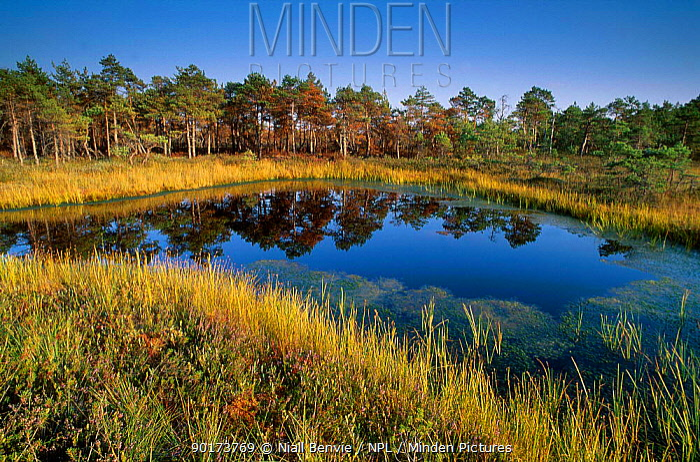 Wetland landscape with bog Kemeri NP Latvia  -  Niall Benvie/ npl