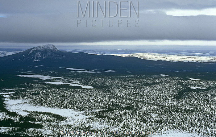 Aerial view over northern conifer forests, mainly black spruce (Picea mariana) Canadian Arctic  -  Nigel Bean/ npl