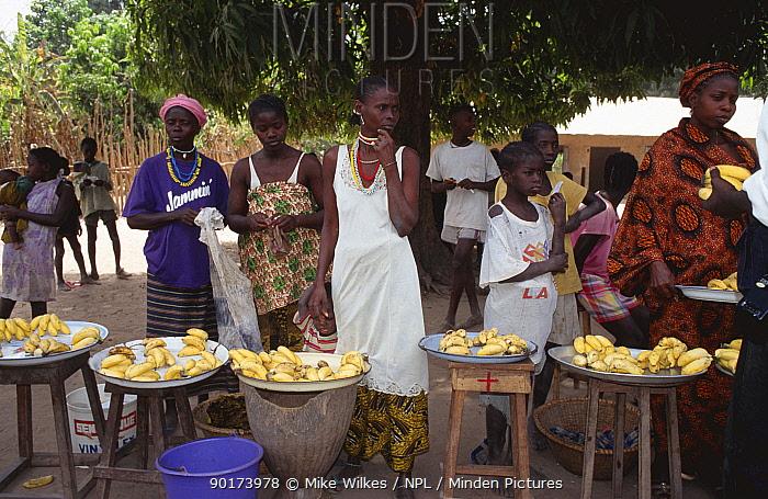 Bananas (Musaceae) for sale at roadside stalls, Senegal, West Africa  -  Mike Wilkes/ npl