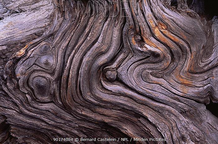 Close-up abstract of tree bark patterns, Belgium  -  Bernard Castelein/ npl