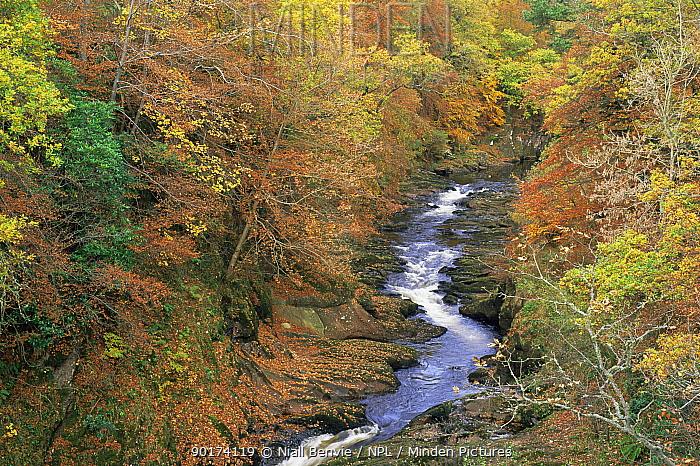 Gannochy Gorge in autumn, Edzell, Fife, Scotland  -  Niall Benvie/ npl
