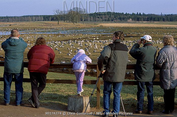 Visitors view Common cranes at breeding reserve (Grus grus) Hornborgasjon Sweden  -  Chris Gomersall/ npl