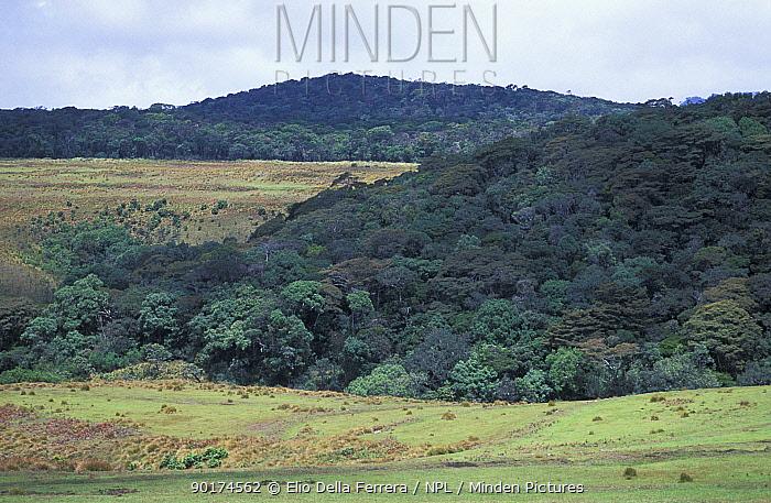 Horton Plains NP, Sri Lanka Montane grasslands and cloud forest  -  Elio Della Ferrera/ npl