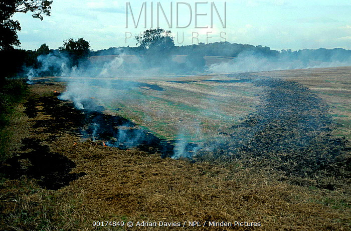 Burning stubble Hertfordshire UK 1992 illegal  -  Adrian Davies/ npl