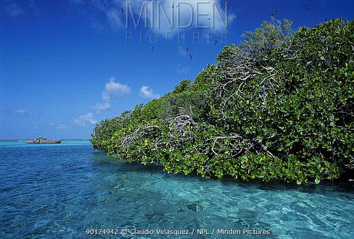 Mangroves Aldabra Indian Ocean Islands  -  Claudio Velasquez/ npl