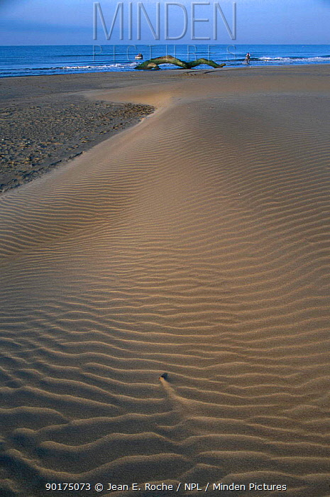 Sandy beach at low tide with sand ripples driftwood Camargue France  -  Jean E. Roche/ npl