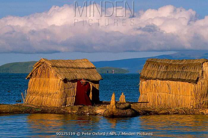 Uros (floating reed islands) with Totora reed boats Lake Titicaca Bolivia  -  Pete Oxford/ npl