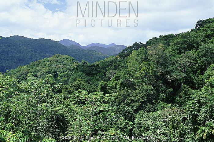 Secondary rainforest along coast near Manzanilla, Northern range, Trinidad  -  Nigel Bean/ npl