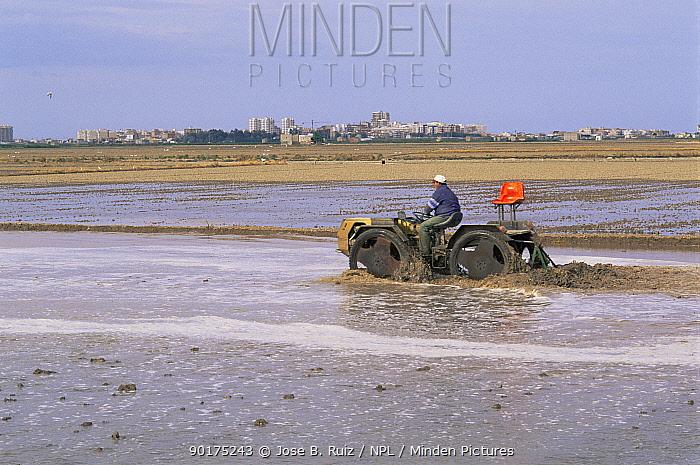 Man on tractor in flooded Rice field, La Albufera NP, Valencia, Spain  -  Jose B. Ruiz/ npl