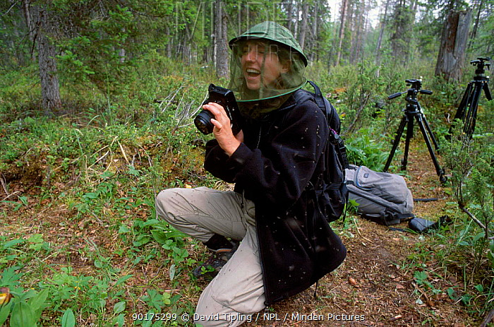 Photographer wearing protection against mosquitoes Finland  -  David Tipling/ npl