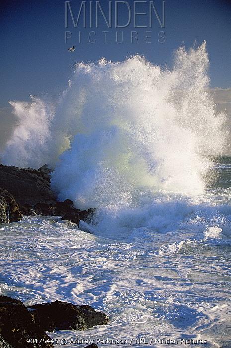 Wave breaking on coast of Bird Island, Lamberts Bay, South Africa  -  Andrew Parkinson/ npl