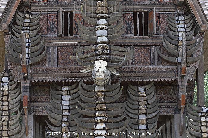 Main pillar of a Tongkonan with Buffalo horns from past sacrifices C Sulawesi, Indonesia  -  Constantinos Petrinos/ npl