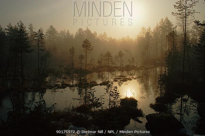 Heathland with standing water Sweden, Scandinavia, Europe  -  Dietmar Nill/ npl