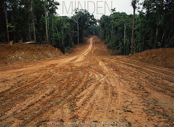Road building for oil exploration in rainforest, Ecuador  -  Morley Read/ npl