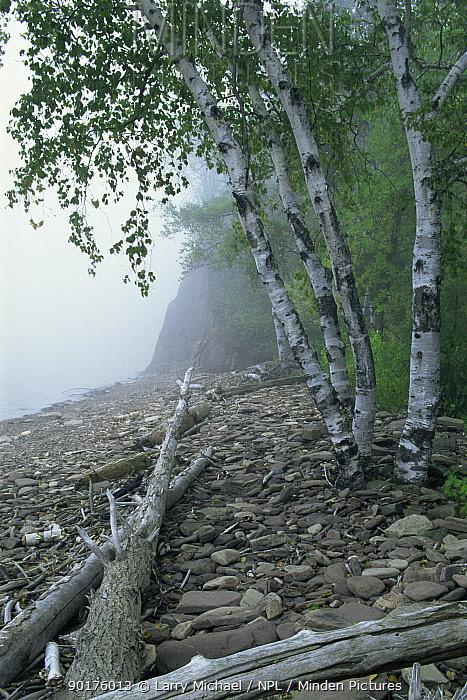 Misty shoreline of Lake Superior with fallen trees, Michigan USA  -  Larry Michael/ npl