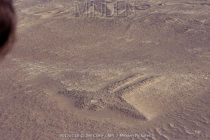 Pre-inca sand drawing of double-headed bird Paracas culture, Paracas NP, Peru  -  Jim Clare/ npl
