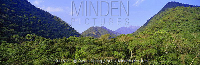 Cloud forest at 5500ft bordering Amazon basin, Manu Biosphere Reserve, Peru  -  David Tipling/ npl