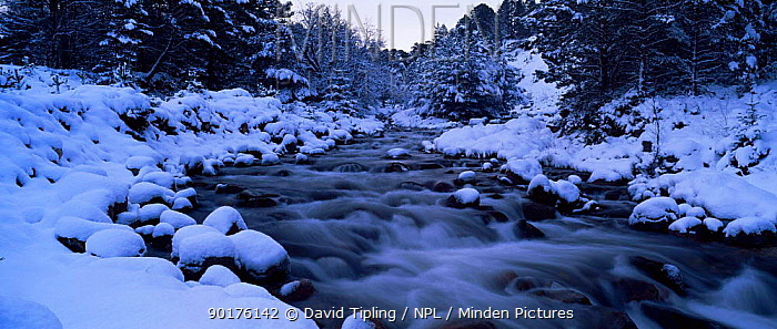 Panoramic view of river in winter snow, Abernethy RSPB reserve, Speyside, Scotland, UK  -  David Tipling/ npl