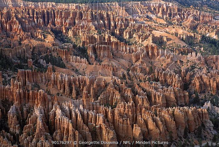 Hoodoos in Bryces Amphitheater Bryce Canyon NP Utah USA sandstone erosion  -  Georgette Douwma/ npl