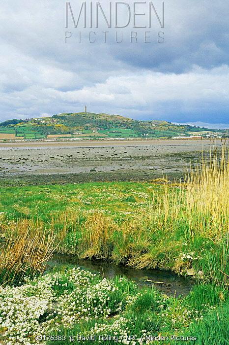 Strangford Lough at low tide, Co Down, Northern Ireland  -  David Tipling/ npl