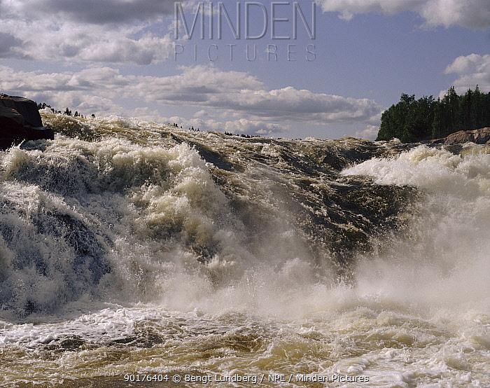 Waterfall on Kalix river, Sweden, Scandinavia, Europe  -  Bengt Lundberg/ npl