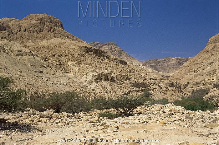 View up Nahal Arugot, Dead Sea, En Gedi, Israel  -  Nigel Bean/ npl