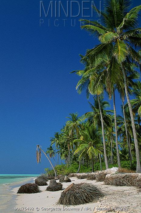 Coastal erosion Shifting sands 1m, yr beach loss Coconut palm trees collapse Lakshadweep  -  Georgette Douwma/ npl