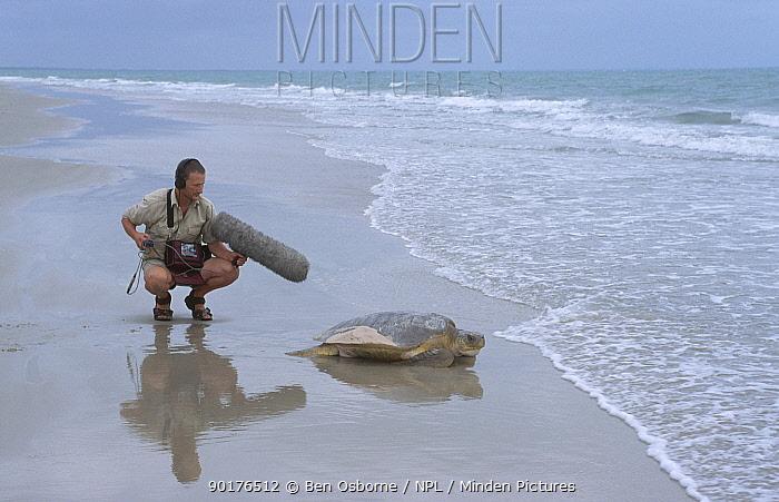Ben Osborne sound recording Flat back turtle returning to sea Crab Is QLD Australia  -  Ben Osborne/ npl