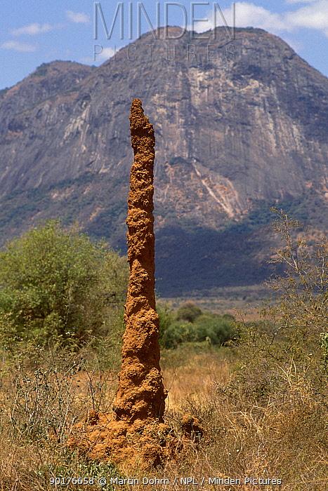 8 metre Termite chimney (Isoptera) Sololo Kenya  -  Martin Dohrn/ npl