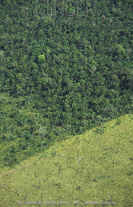 Rainforest deforestation for cattle grazing Amazon Brazil, South America  -  Martin Dohrn/ npl