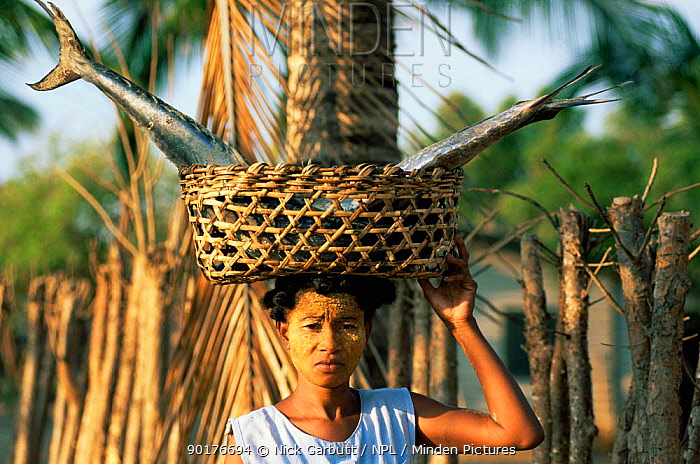 Sakalava lady carrying fish in basket on head, Morondava, W Madagascar  -  Nick Garbutt/ npl