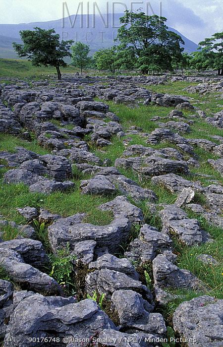 Limestone pavement Ingleborough Yorkshire UK  -  Jason Smalley/ npl