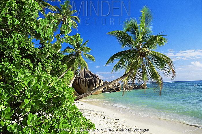 Palm trees on the beach, Anse Source d'Argent beach, La Digue, Seychelles, Indian Ocean  -  David Noton/ npl