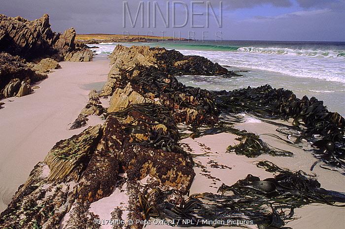 Surf Bay, East Falkland Island  -  Pete Oxford/ npl