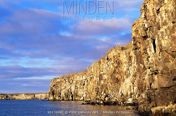 Cliff walls on Tower, Genoves Island, Galapagos Islands  -  Pete Oxford/ npl