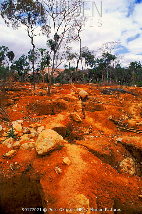 Panning for gold from mine Andrano-Tsimaty village, near Daraina, North Madagascar  -  Pete Oxford/ npl