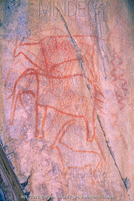 Bushman rock painting of elephant and antelope, Tsodilo Hills, Botswana  -  Pete Oxford/ npl