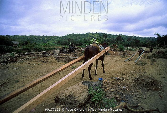 Logging industry Chongon-Colonche Cordillera Western Ecuador South America  -  Pete Oxford/ npl