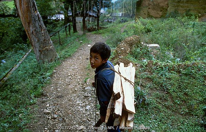 Lisu child carrying wood for fuel Yunnan, China  -  Xi Zhinong/ npl