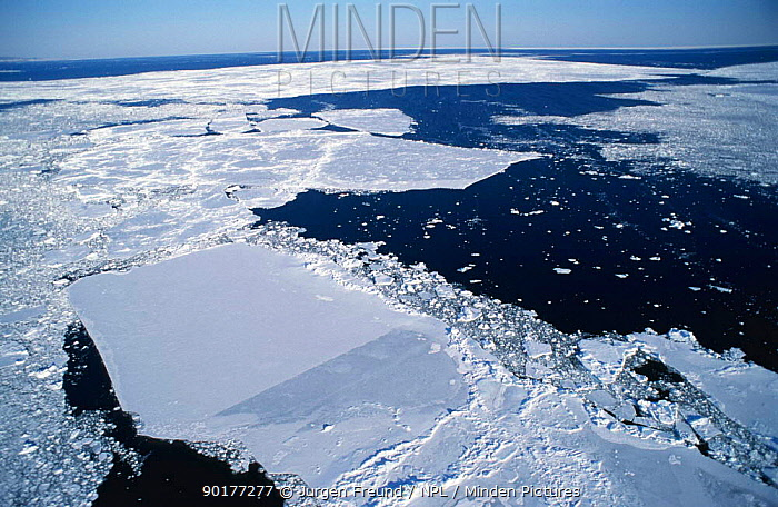 Looking down onto broken ice fields, St Lawrence stream, Magdalen Islands, Canada  -  Jurgen Freund/ npl