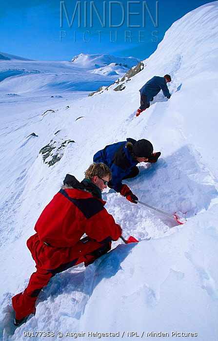 Digging a snow hole to shelter in Finse, Hardangervidda, Norway  -  Asgeir Helgestad/ npl