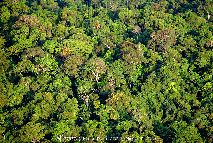 Aerial shot of Amazon rainforest, Brazil  -  Martin Dohrn/ npl