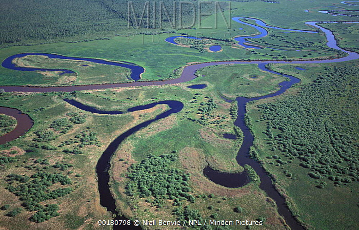 Aerial of Emaja jogi river showing oxbow lakes, Alam pedja Nature Reserve, Estonia  -  Niall Benvie/ npl